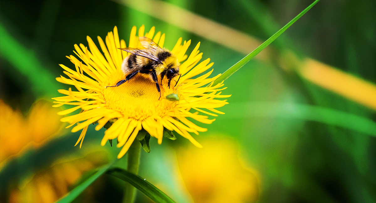 A guide to british bees os getoutside north west wall mason bee freerunsca Gallery