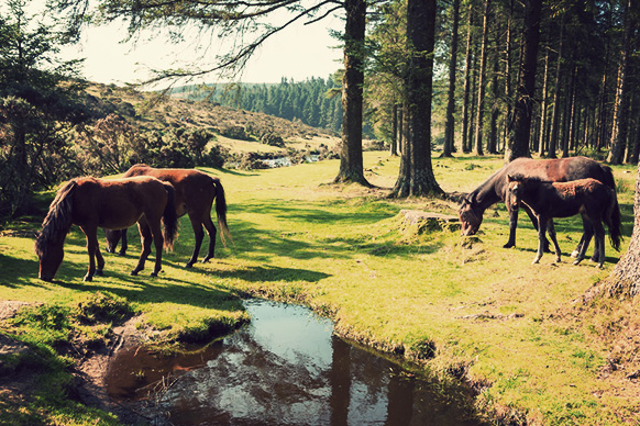 Bellever, Dartmoor