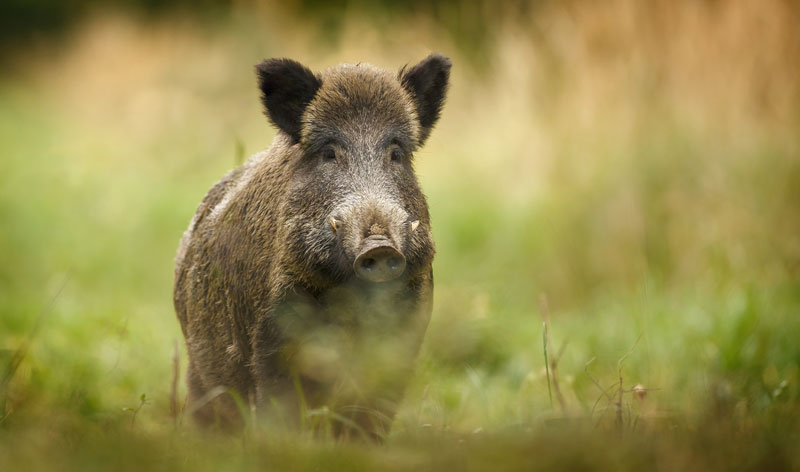 Keep Your Eyes Open And You Can Spot Some Totally Unexpected Wildlife In Britain