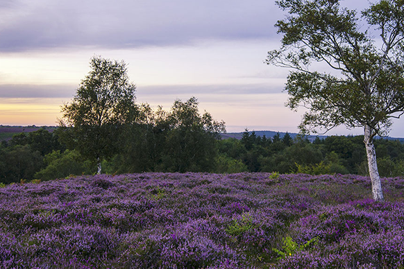 site/uploads/images/assets/National Parks/582x388-Thumbnail-newforest.png